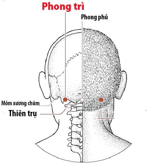 Huyệt Phong Trì : Giảm các bệnh xương cổ