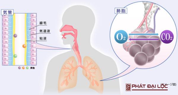 Tạo lớp màng bảo vệ phổi khói khí độc